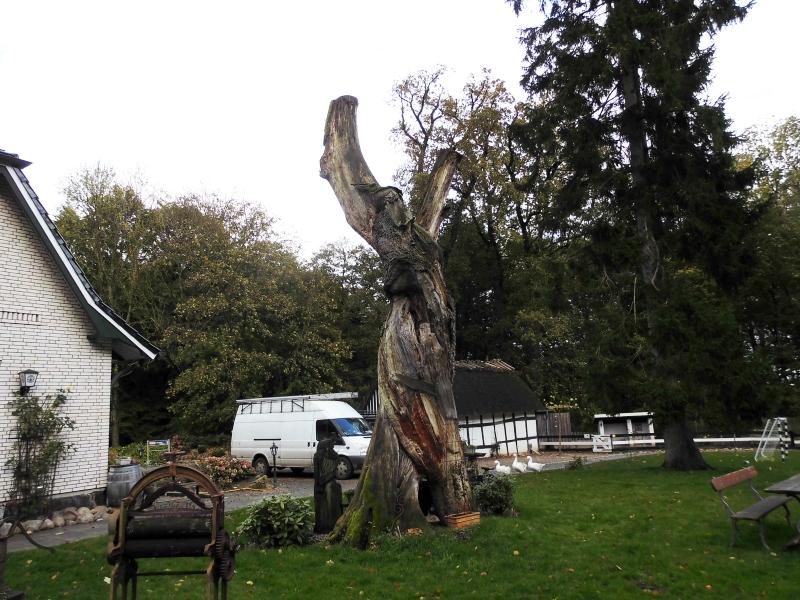 Kappeln - Hüholz - Doppeleiche - Foto: Michaela Fiering (25.10.2017)