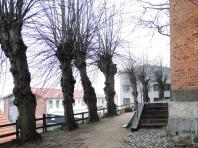 St. Nikolai-Kirche - Fällung der Linden - Foto: Michaela Bielke (20.02.2015)