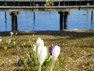 Kappeln - Frühling am Hafen - Foto: Michaela Bielke (08.04.2013)