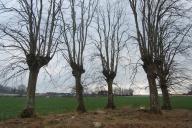 Kappeln - Gut Roest - Hexenbäume - Foto: Ulli Erichsen (Januar 2014)