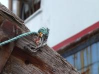 Kleine Leute - Werftarbeit in Hirtshals - Foto: Manfred Rakoschek