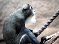 Zoo Rostock - Foto: Manfred Rakoschek (01.01.2020)