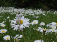 Blüten - Foto: Manfred Rakoschek