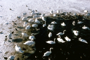 An der Schlei - Foto: Fritz Reinhardt (26.02.1979)