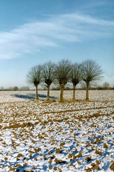 Hexenbäume - Foto: Gerd Ahrens (70er-J.)