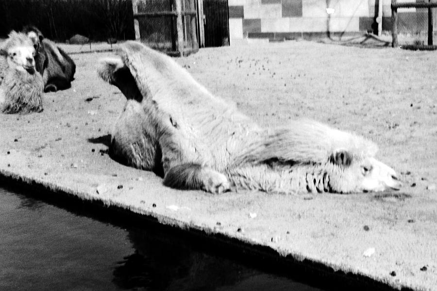 Berlin - Zoologischer Garten - Foto: Achim Gutzeit (März 1968)
