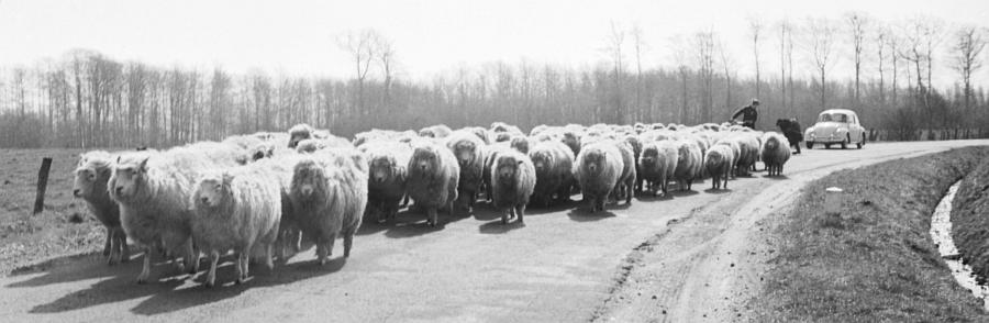 Ostermarsch 1968 (Schlei-Bote vom 13.04.1968)