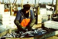 Kappeln - Fischereihafen - Foto: Asmus Peter Weiland