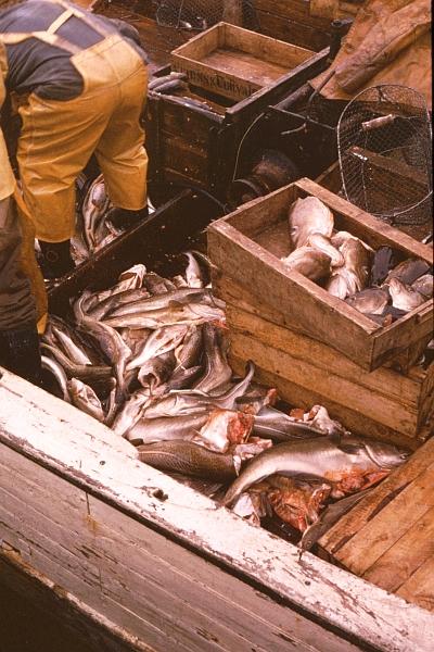 Fischkutter - Foto: Walter Stöckel